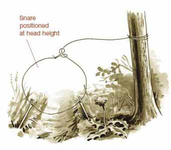 snare trap How To Find And Catch Small Game